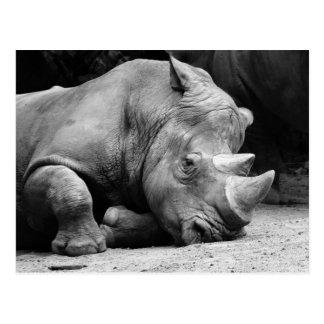Cartão Postal Rinoceronte preto e branco