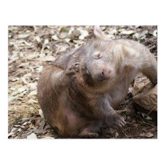 Cartão Postal Risco de Wombat