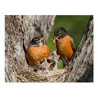 Cartão Postal Robins V