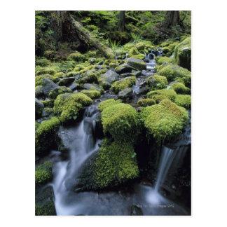 Cartão Postal Rochas Mossy no córrego da floresta
