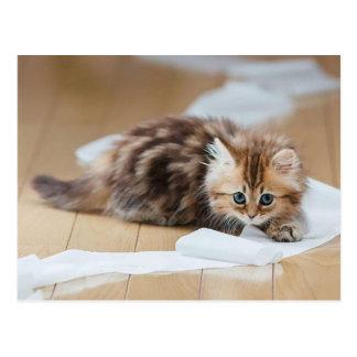Cartão Postal Rodas Paper kitten
