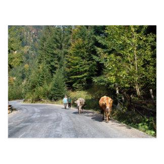 Cartão Postal Romania, Moldova, andando as vacas