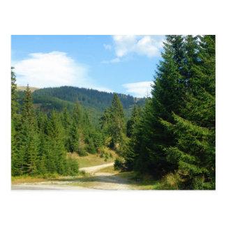 Cartão Postal Romania, Moldova, entre as florestas do pinho