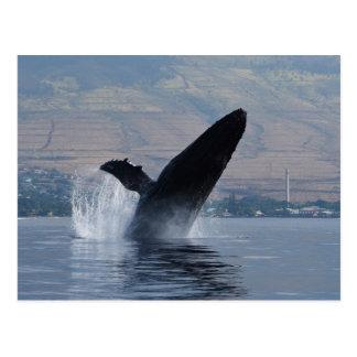 Cartão Postal rompimento da baleia do humback