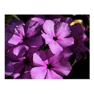 Cartão Postal Rosa/cartão selvagem roxo do Phlox