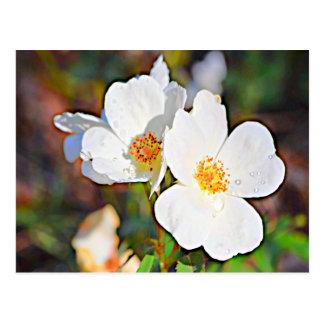 Cartão Postal Rosa Cherokee de Geórgia