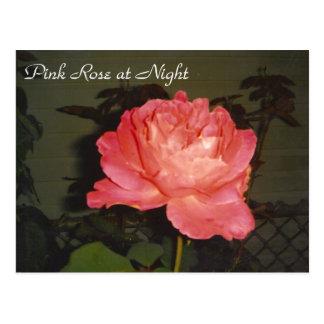 Cartão Postal Rosa do rosa na noite