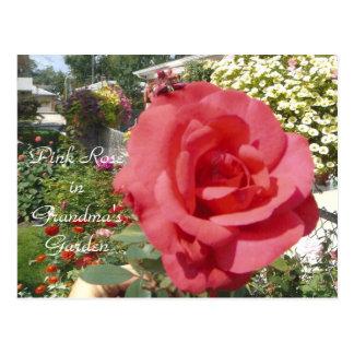 Cartão Postal Rosa do rosa no jardim da avó