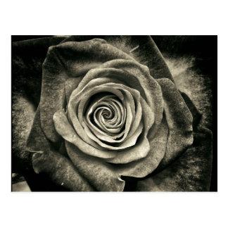 Cartão Postal Rosa preto e branco do vintage