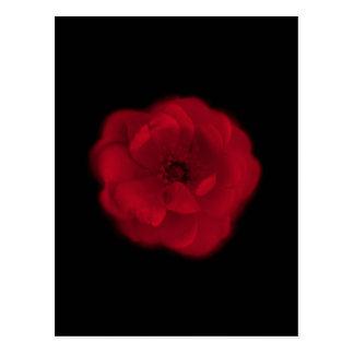 Cartão Postal Rosa vermelha. Fundo preto