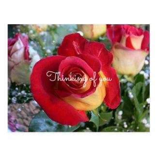 Cartão Postal Rosa vermelha que pensa de você mensagem feita sob