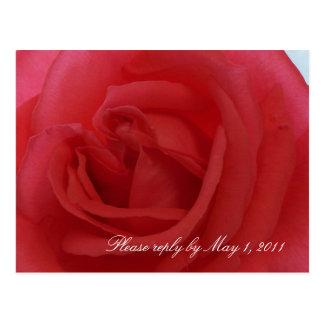 Cartão Postal Rosa vermelha RSVP