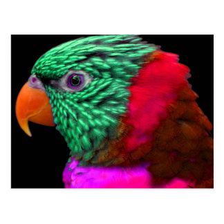 Cartão Postal Rosa vermelho do verde exótico do papagaio