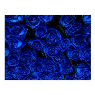 Cartão Postal Rosas azuis