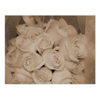 Cartão Postal Rosas brancos no Sepia