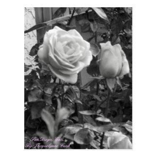 Cartão Postal Rosas San Diego, Cali. Por: Cozinheiro de