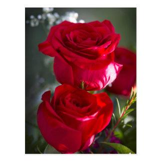 Cartão Postal Rosas vermelhas românticas vibrantes