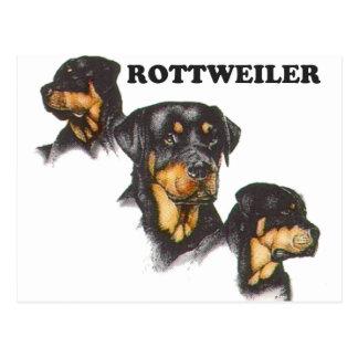 Cartão Postal Rottweiler