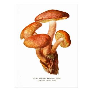 Cartão Postal Rutilans do Tricholoma