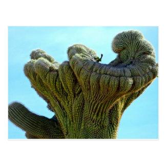 Cartão Postal saguaro deformado cactus.jpg
