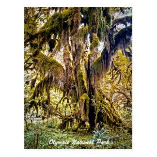 Cartão Postal Salão da fuga dos musgos, parque nacional olímpico