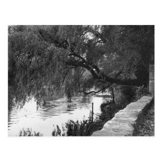 Cartão Postal Salgueiro que pende sobre o rio