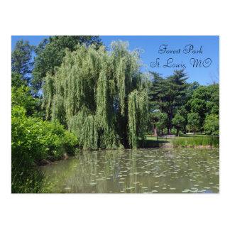 Cartão Postal Salgueiro Weeping de Forest Park na lagoa