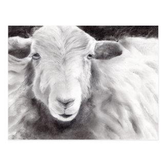 Cartão Postal Sally os carneiros (a363)