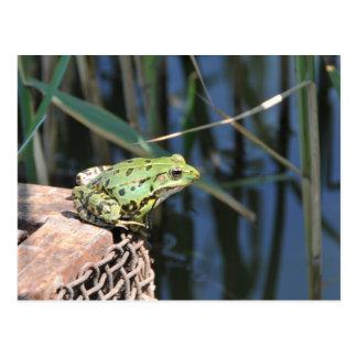 Cartão Postal Salto - sapo verde no lago