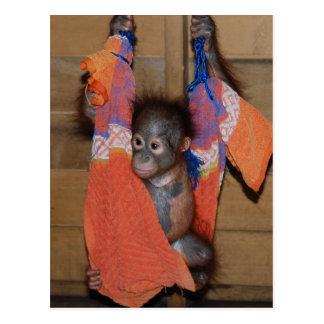 Cartão Postal Salvamento doce do orangotango do bebê