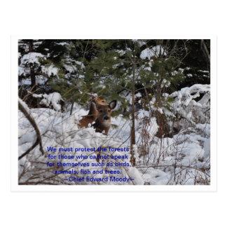 Cartão Postal Salvar as florestas