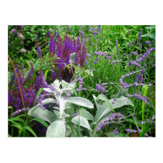 Cartão Postal Salvia, Lavendar, paire a orelha