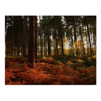 Cartão Postal Samambaias do outono