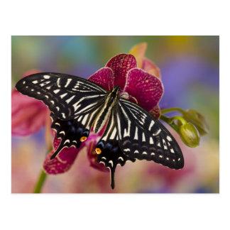 Cartão Postal Sammamish, borboleta tropical 3 de Washington