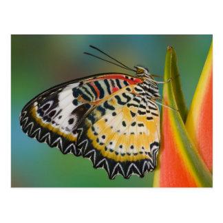 Cartão Postal Sammamish, Washington. Borboletas tropicais 67