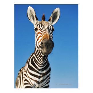 Cartão Postal Santuário de animais selvagens de Harnas, Namíbia,
