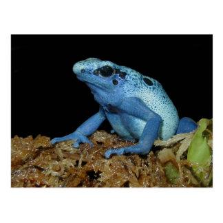 Cartão Postal Sapo azul do dardo (azureus) de Dendrobates .jpg