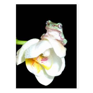 Cartão Postal sapo de árvore na orquídea