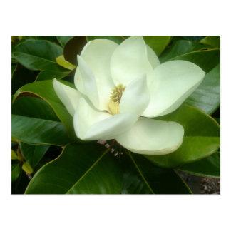 Cartão Postal Savana Geórgia da flor da magnólia