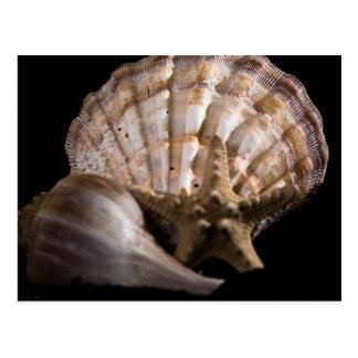 Cartão Postal Scallop, pústula, estrela de mar