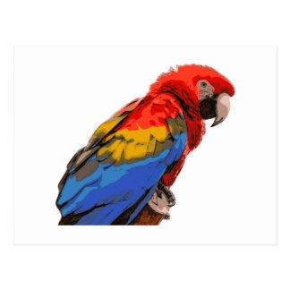 Cartão Postal Scarlet_Macaw