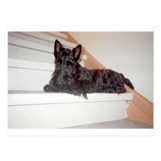 Cartão Postal scottie em escadas