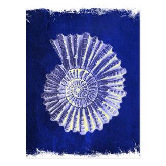 Cartão Postal seashell branco azul litoral botânico do vintage