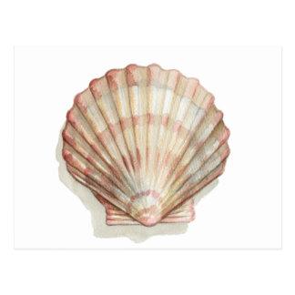 Cartão Postal Seashell cor-de-rosa e de creme
