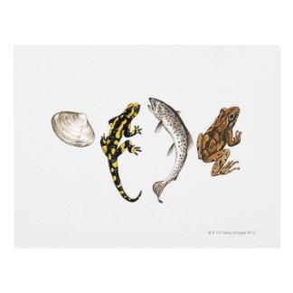 Cartão Postal Seashell, salamandra, salmão