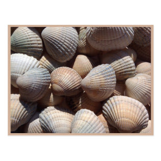 Cartão Postal Seashells
