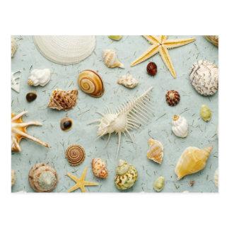 Cartão Postal Seashells Assorted no fundo azul