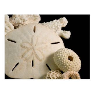 Cartão Postal Seashells e dólar de areia brancos