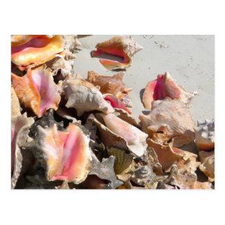 Cartão Postal Seashells nos turcos da praia | e na foto de