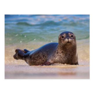 Cartão Postal Selo de porto do bebê na água